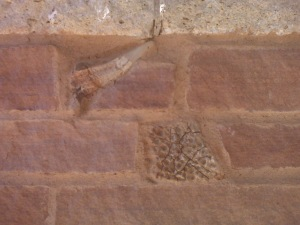 Fossils in a wall